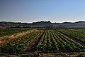 Farm, Vioolsdrift, Northern Cape, South Africa (20531639822).jpg