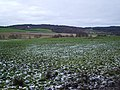 Farm Land on the Scotsburn to Tain Road - geograph.org.uk - 100838.jpg