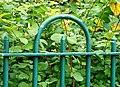 Fence, Botanic Gardens, Belfast - geograph.org.uk - 1427927.jpg