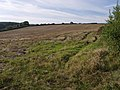 Field at Middlecot - geograph.org.uk - 534612.jpg