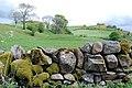 Field by Beltonhill - geograph.org.uk - 430855.jpg