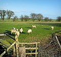 Fields Behind Ivychurch Church - geograph.org.uk - 229625.jpg
