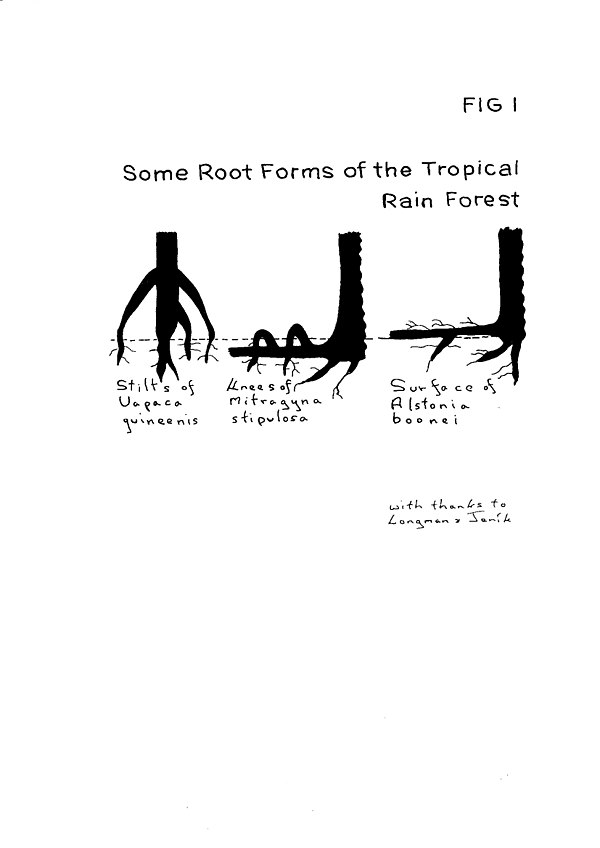 Fig I Some Root Forms.jpg