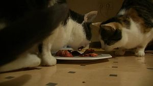 Файл:Finchen+Lotti eating 01 (1) ies.webm
