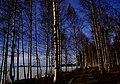 Finland 2014-03-16 (13386806404).jpg