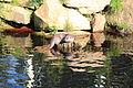 Fischotter-Unterwasserreich 2216.JPG