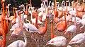 Flamingo03 960.jpg