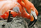 Flamingowithchick08.jpg