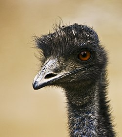 Flickr - aussiegall - Having a bad hair day.jpg