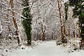 Flickr - ronsaunders47 - SNOWBOUND 3. BIRCHWOOD CHESHIRE..jpg