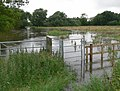 Flooded Spearwort Fields - geograph.org.uk - 506428.jpg