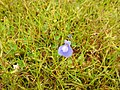 Flora from Madayipara DSCN2613.jpg
