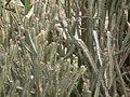 Flora of Tanzania 4525 Nevit.jpg