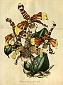 Flore des serres et des jardins de l'Europe - vol. 01 - page 125.jpg
