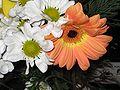 Flores 030.jpg