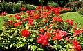 Flower beds, Botanic Gardens, Belfast (3) - geograph.org.uk - 889070.jpg