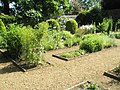 Flowerbeds within Petersfield Physic Garden - geograph.org.uk - 834943.jpg