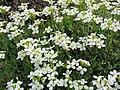 Flowers (2921705639).jpg