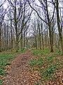 Footpath in Wyre Forest - geograph.org.uk - 674621.jpg