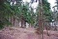 Footpath through conifers, Clowes Wood (2) - geograph.org.uk - 1211394.jpg