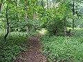 Footpath through woods - geograph.org.uk - 1352993.jpg