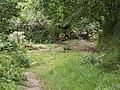 Footpath to Dartmeet - geograph.org.uk - 1410308.jpg