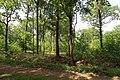 Forêt domaniale de Bois-d'Arcy 52.jpg