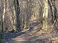 Forest Path near Kovácsi erdőföldek.JPG