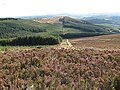 Forest and Heathland - geograph.org.uk - 1493107.jpg