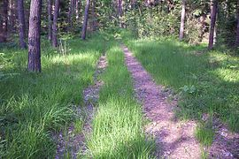 Forest bpk path cm01.jpg