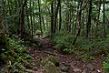 Forest in Yatsugatake 06.jpg