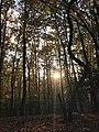 Foresta Umbra, dove la natura è ancora intrisa di magia.jpg