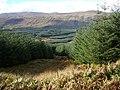 Forestry above Glen Dochart - geograph.org.uk - 62933.jpg