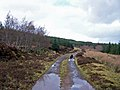 Forestry road, Greshornish Forest - geograph.org.uk - 1195911.jpg