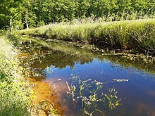 Sunny, water-filled ditch at the edge of f forest