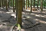 Foxholes - Bois Jacques - Bastogne - 07.jpg