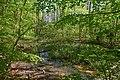 Frühlingswald an der Unteren Schwentine 9931.jpg