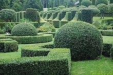 exemple de taille des arbustes persistants : Topiaire