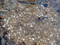 Frog spawn in stream at the Taunus 2.jpg