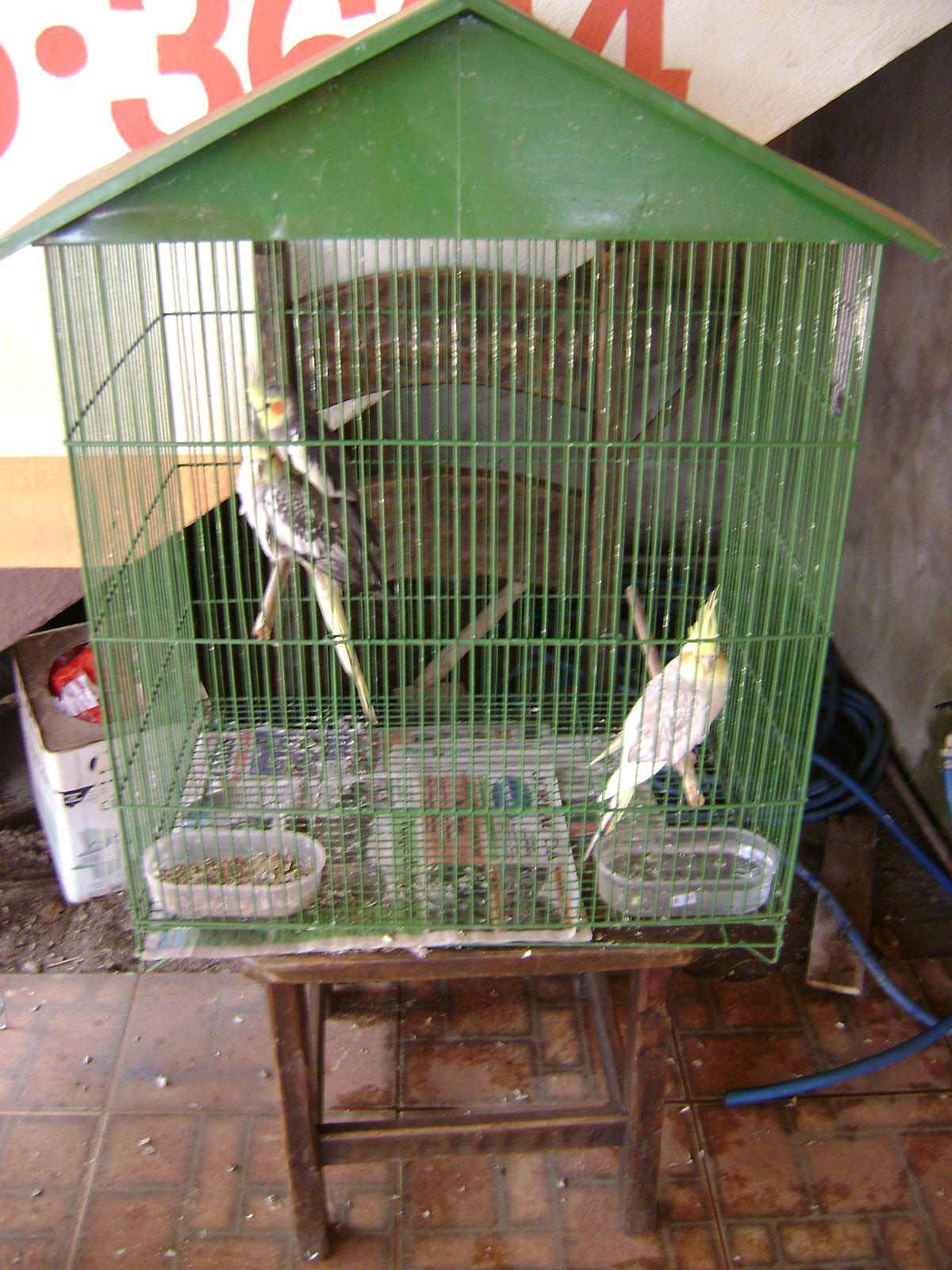 Bird Cage Simple English Wikipedia