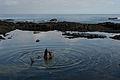 Galápagos Inseln, Ecuador (13895003096).jpg