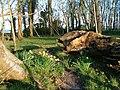 Galloway House Woods - geograph.org.uk - 736456.jpg