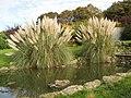 Garden - panoramio (27).jpg