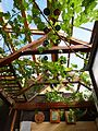 Garden house Vines.JPG