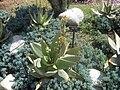 Gardenology.org-IMG 2283 hunt0903.jpg