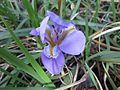 Gardenology.org-IMG 2400 ucla09.jpg