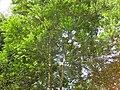 Gardenology.org-IMG 7083 qsbg11mar.jpg