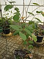 Gardenology.org-IMG 8014 qsbg11mar.jpg