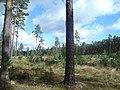 Garkalnes novads, Latvia - panoramio - BirdsEyeLV (3).jpg