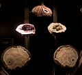 Geodes at the American Museum of Natural History.jpg
